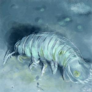 30cmの深海ダンゴムシ?!