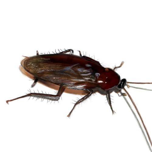 ゴキブリの画像 p1_28