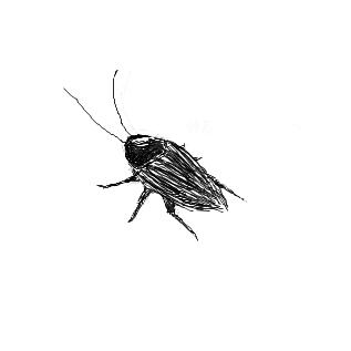 ゴキブリの画像 p1_10