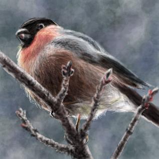 鳥:ウソ by とぅこ とぅこユーザーページスレ#1542