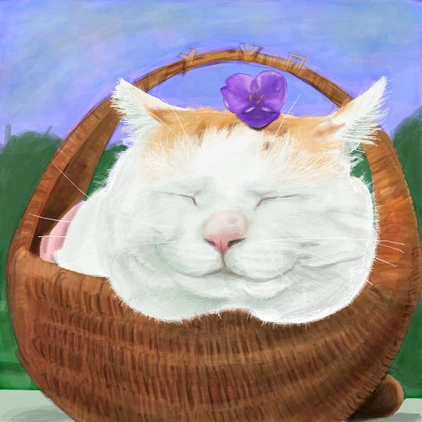 かご猫さん