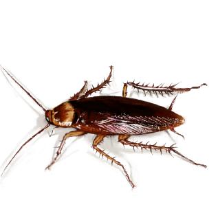 ゴキブリの画像 p1_11