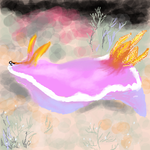 フジイロウミウシ
