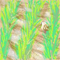 合鴨のいる田んぼ。
