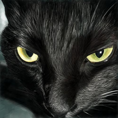 黒猫(グニャラくんの飼い猫kikiさん)