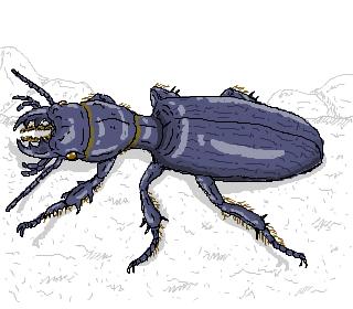 穴 を掘る 昆虫 が好きなのか?、 ファ ーブル 先生 よ。