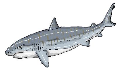 イタチザメの画像 p1_3