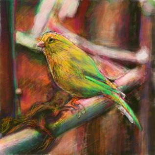 カナリア(鳥類)