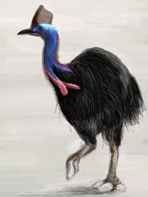 世界一危険な鳥