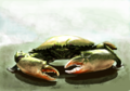 「ノコギリガザミ」/ノコギリガザミの絵(語るスレ#157)