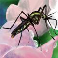 蚊について語るスレ>>42